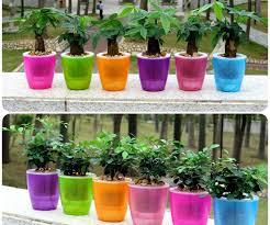 innovative grow blog in self watering planter