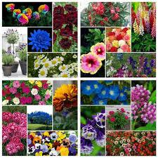 3600 pcs 100 natural flowers seeds 20 different varieties