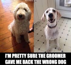 Hyper Dog Meme - grooming darwin dogs