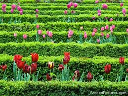 Flower Gardens Wallpapers - hq wallpapers flowers garden wallpapers
