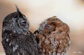 Owl Lovers by Owls Birds By Dave