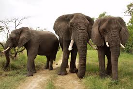 Blind Man And Elephant The Blind Men And The Elephant The Community Foundation Of