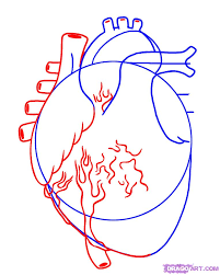 how to draw a human heart step by step anatomy people free