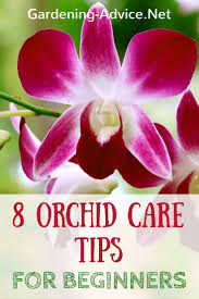 orchids care growing orchids for beginners orchid care