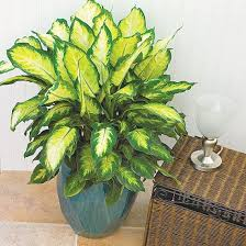 Low Light Indoor Trees 61 Best House Plants Images On Pinterest Plants Gardening And