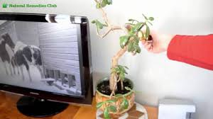 In House Plant How To Stop Cats From Digging In Your House Plants Natural