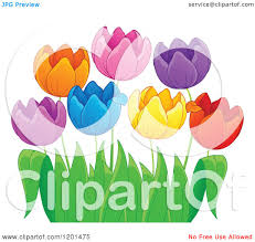 cartoon of colorful tulip flowers and green leaves 3 royalty