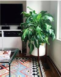 8 Houseplants That Can Survive by 10 Houseplants That Don U0027t Need Sunlight Houseplants Sunlight