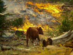 what do wild animals do in a wildfire