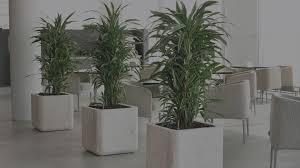improving life u0026 business by enhancing environments plant
