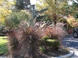 18 best ornamental grasses for utah landscapes images on