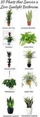 no sunlight plants house plants and idea u0027s pinterest
