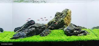 Aquascape Malaysia Cara Membuat Aquascape Sederhana Atagaleri Net