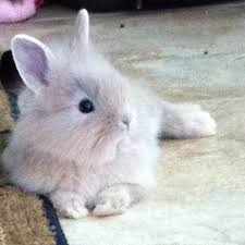 lion heads for sale 6135 best bunny images on bunny rabbits animals