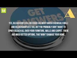 Can Bleach Kill Bed Bugs Can You Get Rid Of Bed Bugs With Bleach Youtube