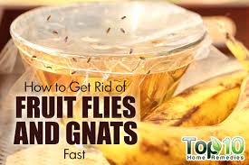 How To Get Rid Of Fruit Flies And Gnats Fast Top  Home Remedies - Small flies in kitchen sink