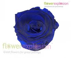 blue roses for sale blue preserved roses