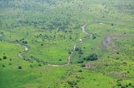 Tropical Savanna Dominant Plants - savanna flora ecological region britannica com