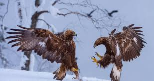 strange eagle wallpapers screamin eagle 2008 hd ultra pinterest