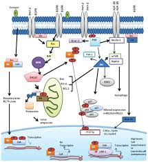 mechanisms associated with resistance to tamoxifen in estrogen