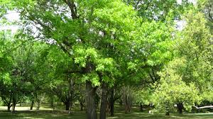 about green tree revival