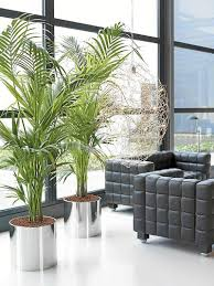 Home Plant Decor by Plant Decoration In Living Room Living Room Ideas
