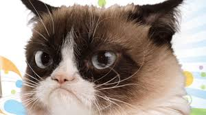 Grumpy Cat Meme Happy Birthday - happy birthday free birthday ecards wishes and greetings