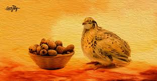 7 health benefits of quail egg
