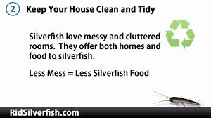 how to kill silverfish 3 tips for immediate results youtube