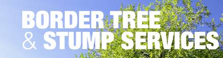 border tree stump services tree stump removal services