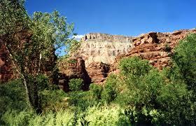 Arizona vegetaion images Havasu canyon arizona jpg