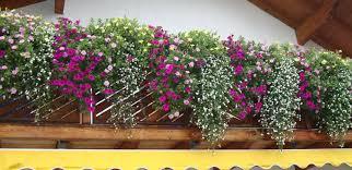 geranien balkon südbalkon alternativen zu geranien mein schöner garten forum