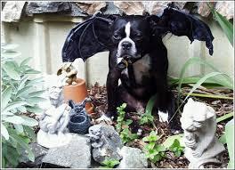 Gargoyle Costume Boston Terrier Halloween Costume Showcase 2006