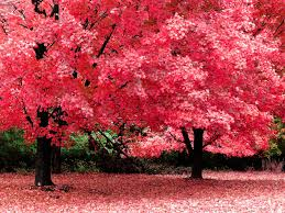 wide hdq free trees wallpapers 45 b scb wallpapers