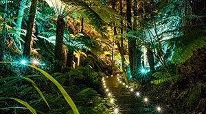 The Australian Botanic Garden Years 7 10 Australian National Botanic Gardens Parks Australia