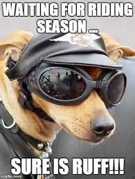 Harley Davidson Meme - harley davidson dog memes imgflip