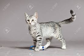 cat stock photos royalty free cat images and pictures