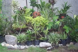 Small Rock Garden Design by Tall Planters And Rocks Against Wall Lined By Stones Bamboo Garden