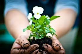 want to become a pro at gardening windermere pullman moscow