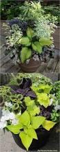 25 best fall flower pots ideas on pinterest fall potted plants