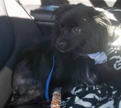 stray animal fund success stories massachusetts veterinary