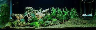 3 feet aquarium journal aquascapeworld