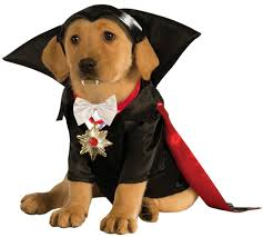 costumes for dogs vire dracula dog costume costume craze