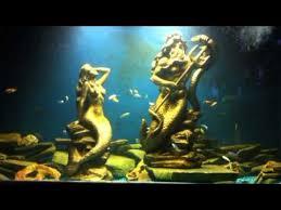 poseidon mermaid with cichlids