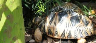 mad4rads extreme tortoises for extreme collectors