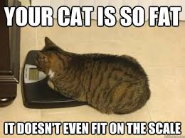 Fat Cat Meme - your cat is so fat it doesn t even fit on the scale meme