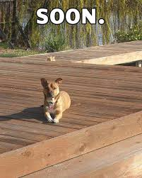 Soon Meme - the best animal soon images 24 pics animal space