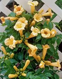 perfect garden plants for gardens terraces and balconies