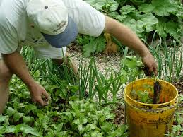 how to keep grassy weeds out of the herb garden gardening q u0026a