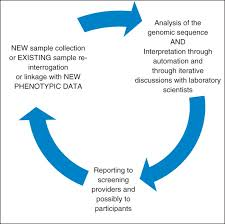 the iterative process of sample and data collection and